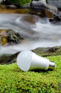 LED Bulbs Nature
