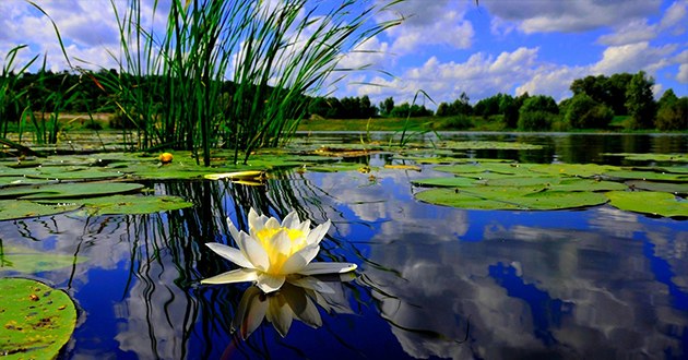 a beautiful pond