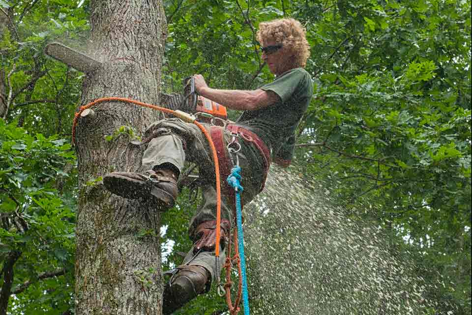How to Become an ISA Certified Arborist