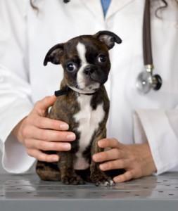 Pet-Health-Insurance-Veterinary