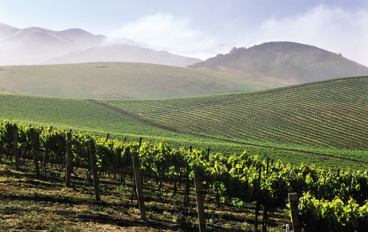 Famous wine regions in california for California wine