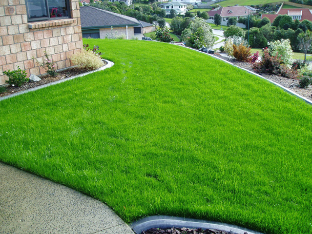 the best low maintenance grass varieties