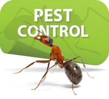 Save Your Garden from Dreadful Pests-The Natural and Chemical Free Approach