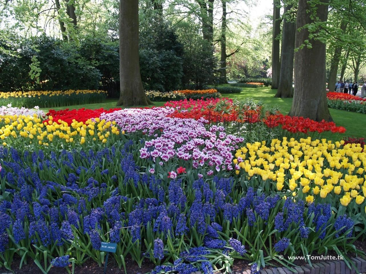 The most beautiful flower gardens in the world keukenhof izmirmasajfo