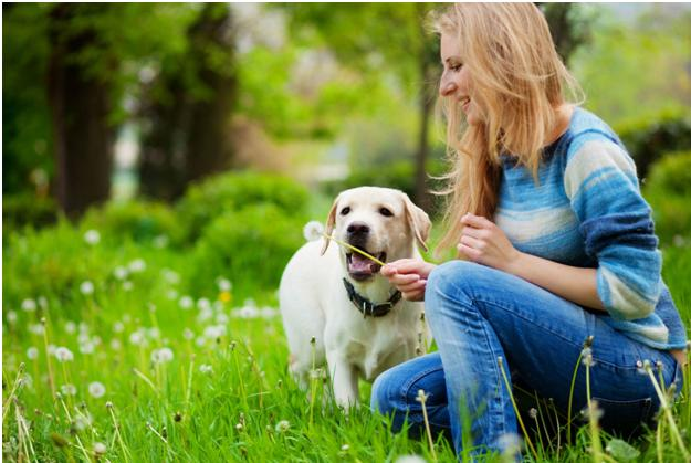 Keep Your Dog Safe: Dangerous Tick Treatments to Avoid