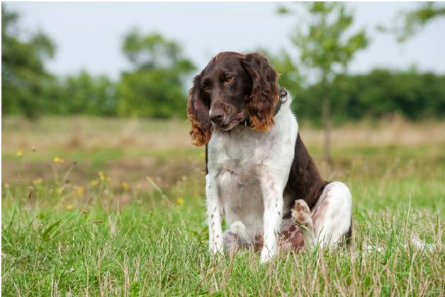 how to keep ticks off your dog