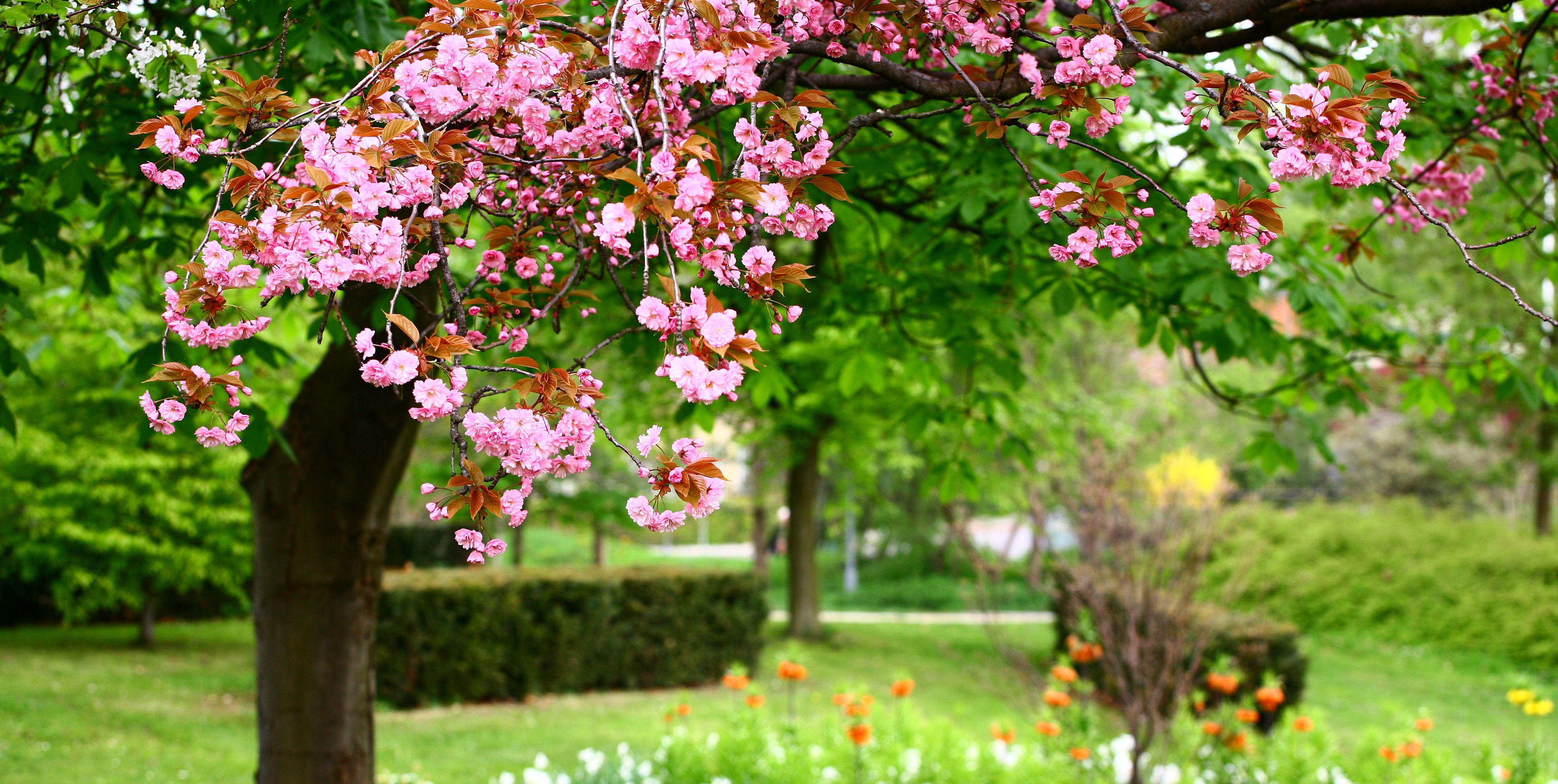 Caring for trees purchased from garden centers during the winter - Gardening mistakes maintaining garden winter ...
