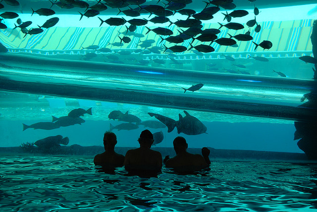 Most Fabulous Swimming Pools In The World