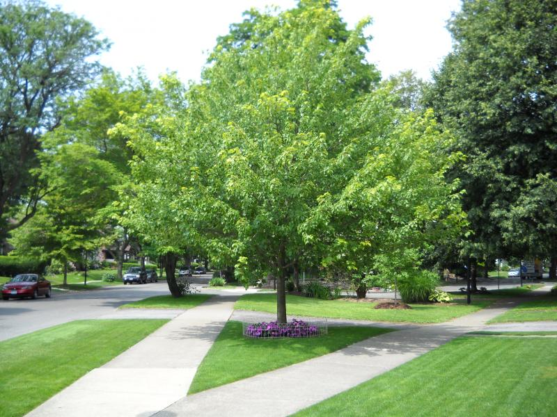 Nice Trees For Yards : Determine the Right Trees for Your Yard