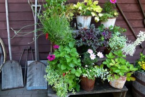 Clever ways to cleanup a yard in the spring