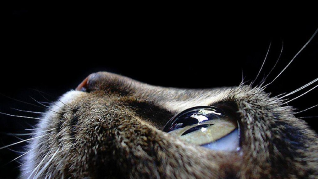 animals-pictures-cat-eyes-macro-photography