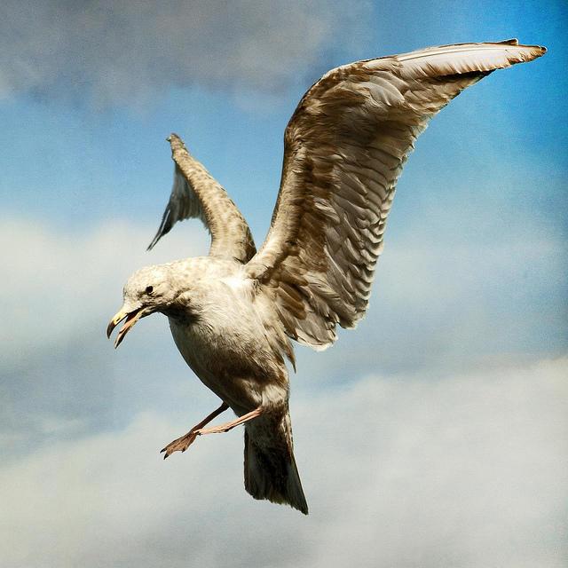 seagull-attack-7616