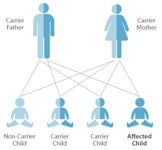 carrier-chart