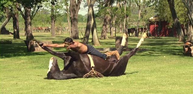 calm-horse