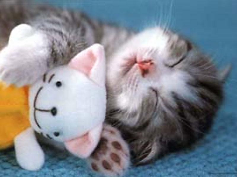 too-cute-kitten