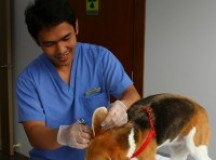 How to Care for Your Pets after Vet Surgery