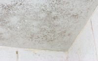 How to remove mould from your home