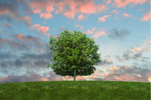 Eco-friendly changes that could save your small business money