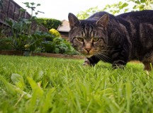 Tip on Keeping Your Lawn Healthy This Summer