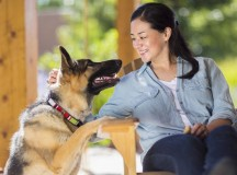 How to Ensure Your Dog Is Happy and Healthy