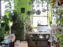 How to Create an Optimal Environment for Indoor Gardening
