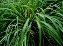 Plants that Keep Pests Away