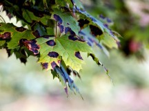 Prevention And Control Of Common Tree Diseases