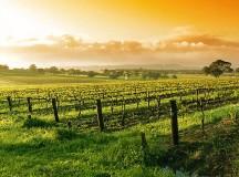 Famous Wine Regions in California