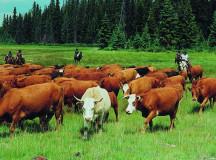Modern Livestock Feeding