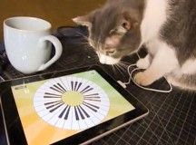 IOS and Android Apps for Cats
