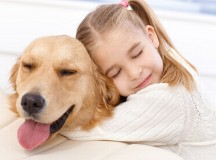 Pet Insurance - The Facts Explained