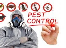 Pest Control: Merits of Eradicating Pests