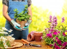 Top 5 Tips that Saves Money when Gardening.