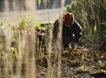 Pushing Through the Ice – Five Flourishing Tips For Cold-Climate Gardening
