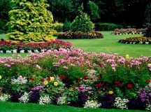 Enjoy the Benefits of Hiring Competent Lawn Maintenance and Landscaping Company