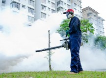 What Can Extermination Services Do For You?