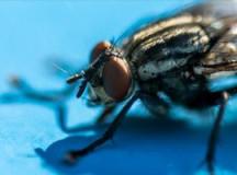 The Hidden Dangers of Pests
