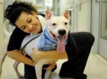 Things You Should Know Before Adopting a Pet