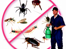 Maximize Your Investment by Vanquishing Pests [Infographic]