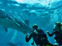 Planning your next diving Holiday? Read our guide