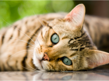 How to Make a Lasting Memory of Your Pet