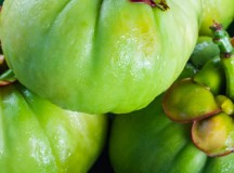 What's the Big Deal About Garcinia Cambogia