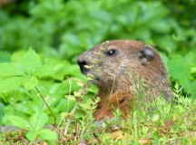 Tips and Tricks to Rid Gardens of Pests