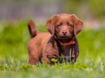 5 Ways to Puppy-proof Your Backyard