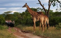 African Adventure: Fun and Amazing Things to do on an African Safari