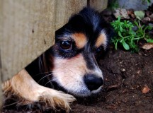 Runaway Dogs: Tips to Keeping Your Roaming Pet Safe