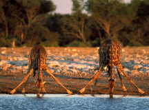 How to Stay Safe When Travelling in Africa
