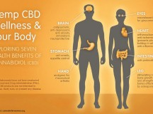 Health Benefits of CBD Oil: What is CBD oil?