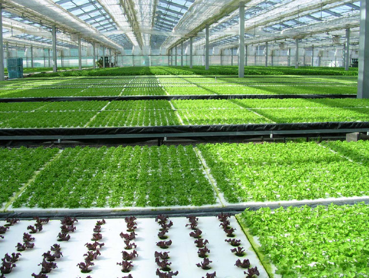 Hydroponics And Greenhouses Grow Bigger And Better With No