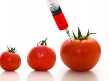 Why GMO Labeling is Important